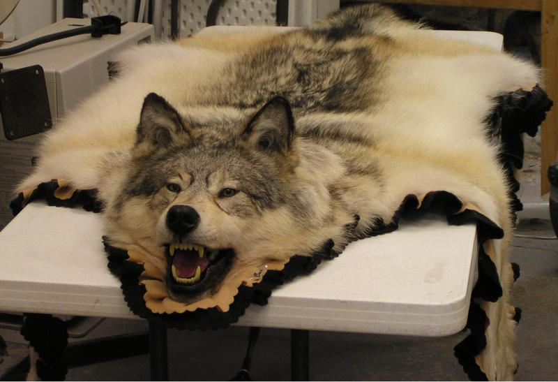 Wolf Rug For Sale Rugs Ideas